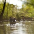 Canoeing the Lake Washington Arboretum – Tilt Shift Photography